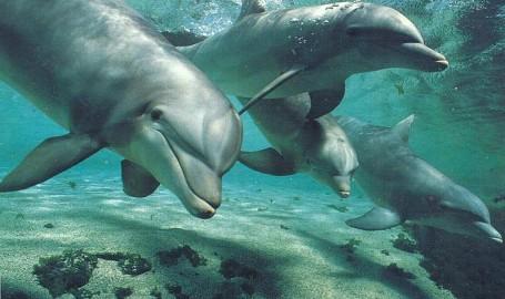 Delfines Buceo